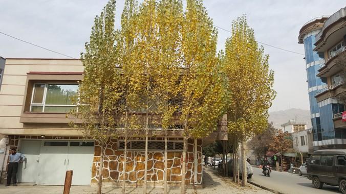 فصل خزان است و درختان رنگهای گرم به خود گرفته اند.